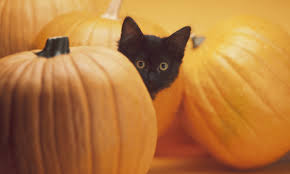 10 fun halloween facts for families howstuffworks