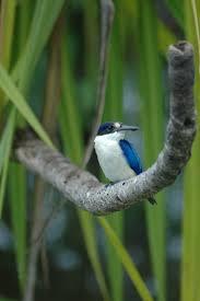 best 20 australia national bird ideas on pinterest national