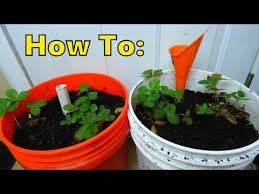 How To Make A Self Watering Planter by Part Two Easiest How To Make Self Watering Sip Planter With 5