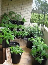 Kitchen Gardening Ideas Balcony Kitchen Gardening Ideas For Limited Space Garden Talk
