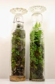 94 best terrarium images on pinterest plants terrarium ideas