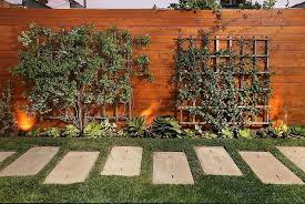 Tree Ideas For Backyard Best Trees To Plant Along Fence For Privacy Ideomotor Club