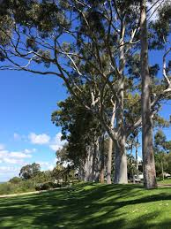 Kings Park Botanic Garden by Evening The Score Perth Albany Perth 1200k Rivet Cycle Works