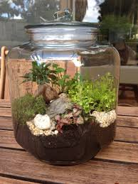 creating terrariums for under 30 in australia u2013 lemondepetitdesigns