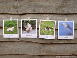 animal flash cards in polaroid style mr printables