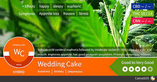 wedding cake og wedding cake cannabis strain information cannasos