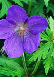 garden flowers names u2013 thin blog