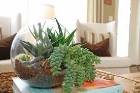 home decoration decorative terrarium plants inside glass