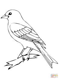 perched canary bird coloring page free printable coloring pages