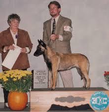 belgian sheepdog breeders pa tresbecc u0027s hystaria of anduin u2013 abmc