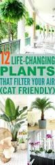best 25 cat plants ideas on pinterest cat garden cat stuff and