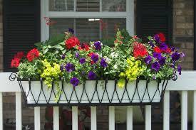 geranien balkon blumen arrangement im blumenkasten 50 inspirierende ideen