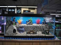 cool fish tank ornaments pictures