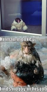 Ikea Monkey Meme - ikea monkey meme collegehumor post