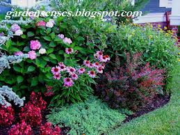 best ground cover flowers plants low growing perennial clx