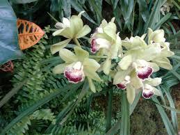 missouri native plant nursery 2017 orchid show at the missouri botanical gardens plants i love