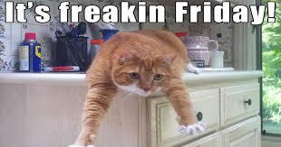 Friday Memes - i can has cheezburger tgif funny animals online cheezburger