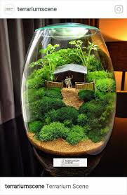 637 best terrariums and tiny gardens images on pinterest plants