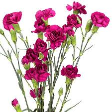 wholesale carnations mini carnations purple wholesale carnations theflowerexchange