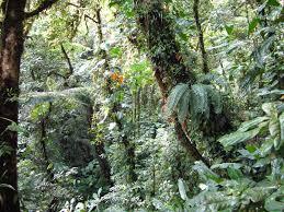 Shoo Rainforest Shop pura vida en costa rica