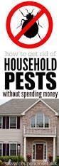best 25 household pests ideas on pinterest borax to kill ants