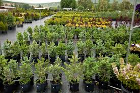 ace landscaping nursery plants for sale