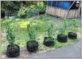 snow peas serendipity life is a garden