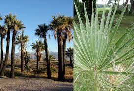 edible california native plants survival food arid edibles prepper u0027s will