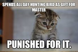 Talking Cat Meme - image result for cats getting punished cats getting into trouble