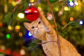 cat christmas christmas season how to keep cats out of christmas tree photo