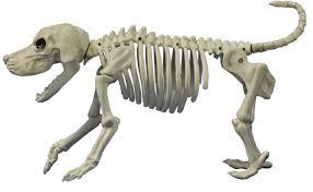 beagle bonez skeleton decorations props