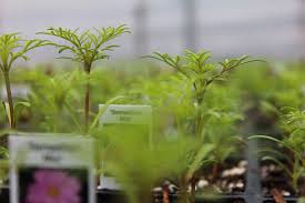 plants indoors starting plants indoors from seed rolling green nursery