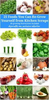 How To Grow Vegetables by 25 Foods You Can Re Grow Yourself From Kitchen Scraps Diy U0026 Crafts