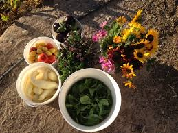 Organic Kitchen Tucson - food conspiracy co op organic grocery tucson arizona summer
