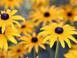 august gardening tips keeping the garden going saga
