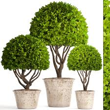 Potted Topiary Trees Topiary Trees Potted 3d Model Cgtrader