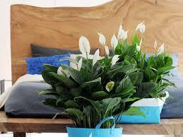 plantes dans la chambre quelle plante pour quelle pièce femme actuelle