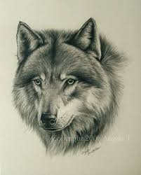 the 108 best images about wolf art on pinterest wolves a wolf