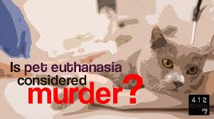 pet euthanasia what does the bible say about pet euthanasia 412teens org