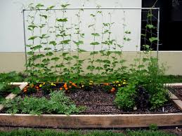 backyard vegetable garden house design and planning
