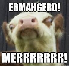 Moo Meme - ermahgerd meme 7 pics