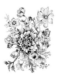 Flower Drawings Black And White - african violet illustration google search botanical prints
