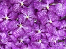 purple orchid flower purple orchid