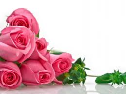 Pink Roses Wallpaper by Pink Roses Hd Desktop Wallpaper Roses Pinterest Rose
