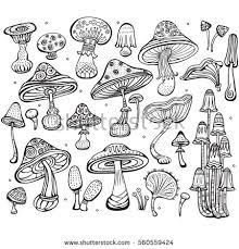set sketch mushrooms stock vector 560559424 shutterstock