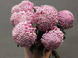 best place to order flowers online best flowers to buy for s day business insider