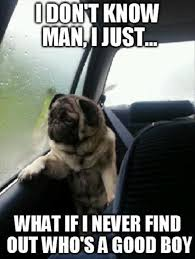 Annoyed Dog Meme - funny dog memes i top 50 of all time i world wide interweb