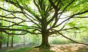 can you identify the uk s most common trees environment the