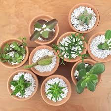 vasinho com planta de 11 unidades bo home botanical home