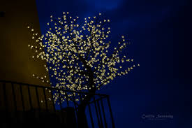 wall christmas lights decorations wallpaper flowers night sky wall branch blue evening canon